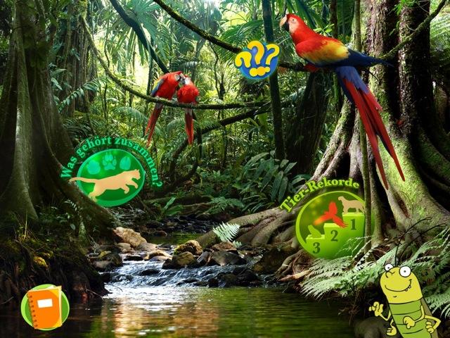 GeoMini Dschungel 1