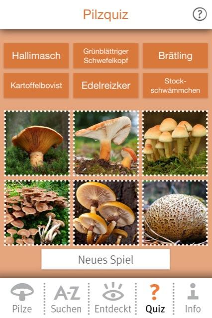 Pilze bestimmen 1