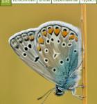 Insekten und Schmetterlinge 3