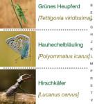 Insekten und Schmetterlinge 4