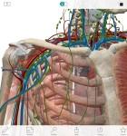 Atlas der menschlichen Anatomie 2