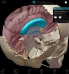 Atlas der menschlichen Anatomie 3