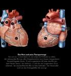 GEO Wissen Gesundheit Herz und Kreislauf 3