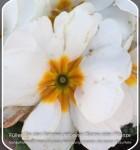 LikeThat Garden 1