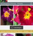 LikeThat Garden 2