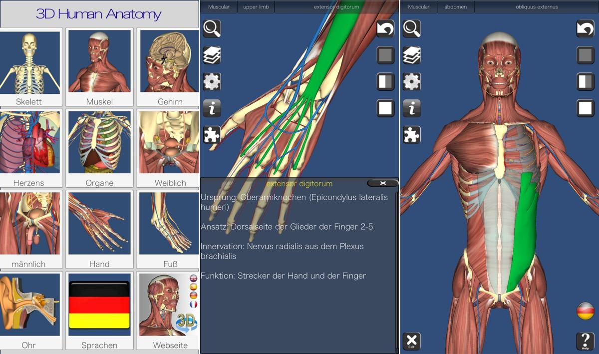 anatomie bilder kostenlos