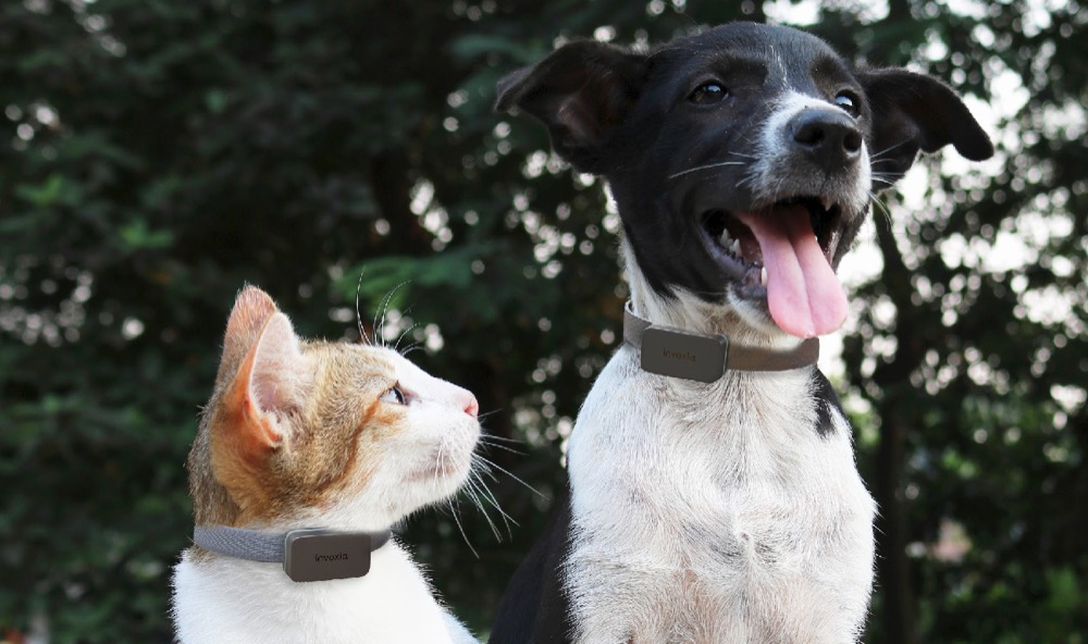 Invoxia Pet Tracker 1